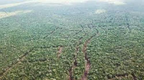 Imagen 1 de 8 de Terreno En Venta En Tulum