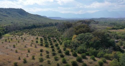 Imagen 1 de 14 de Terreno En Venta, Azahar, Montemorelos