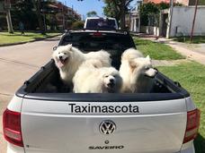 Traslados De Mascotas Taximascota