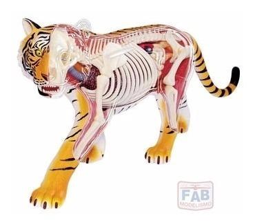 Modelo De Anatomia 4d Para Ensino Veterinario - Tigre