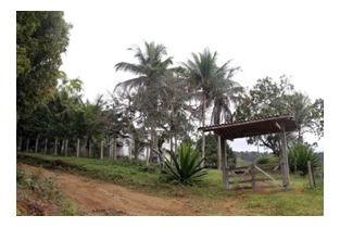 Fazenda De Cacau