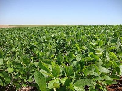 Fazenda Em Caseara - To, Dupla Aptidão - 284