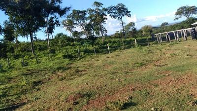 Fazenda A Venda Em Miranda - Ms (pecuária) - 876