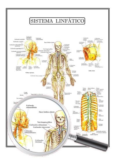 Poster Anatomia Humana Enfermagem Sistema Linfático 45x60 Cm