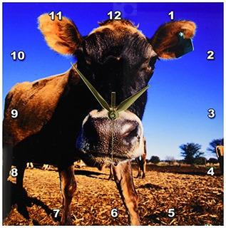 Danita Delimont Ganado Una Vaca Jersey Siendo Curioso