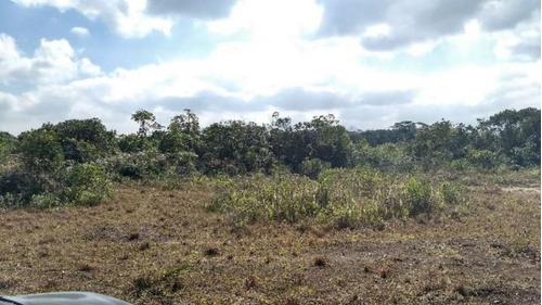 Imagem 1 de 14 de Área Para Sítio De 27 500 Mts Com Riacho - Itanhaém 4690 Npc