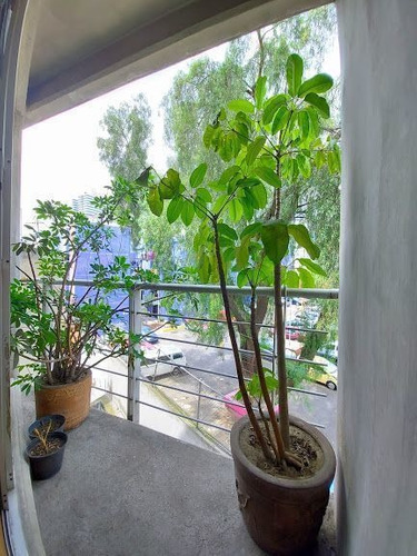 Imagen 1 de 10 de Venta/ Renta Departamento En San Pedro De Los Pinos Con Balc