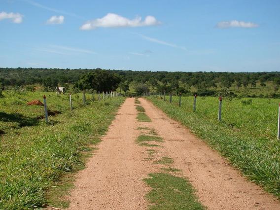 Fazenda Perfil Agricultura E Gado , Cordisburgo - Mg, 245 Hectares , Sede Maravilhosa, Lagoas , 01 Klm Do Asfasto. - 471