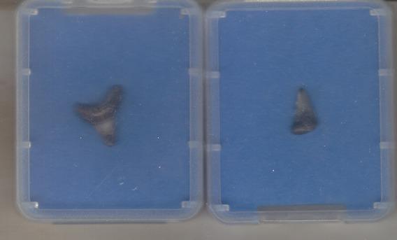Lt 154 - 2 Dentes De Tubarão Autênticos Frete R$ 12,00