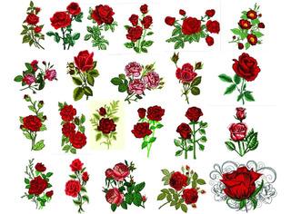 42 Lindas Matrizes Para Bordados Rosas Deslumbrantes 01