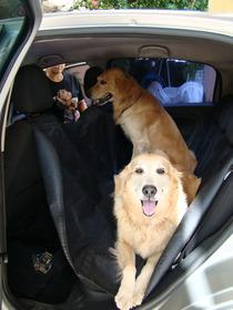 Capa Carro Para Transporte Cachorro Protetora