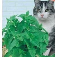 Erva Dos Gatos (brinquedos Para Gatos) 1 Pacote De Sementes