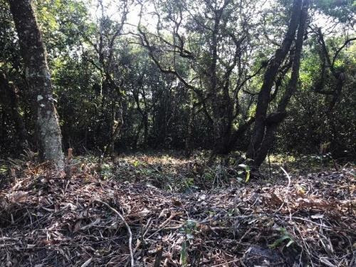 Imagem 1 de 4 de Terreno No Litoral Com 300 M², Em Itanhaém/sp Ter019-pc