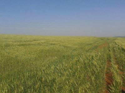 Fazenda De 251 Alqueires Regiao De S. J. Da Serra ( 6017 )