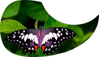 Escudo Palheteira Resinada Violão Aço Butterfly