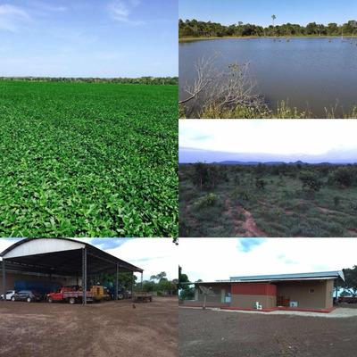 Fazenda Município De Brejinho De Nazaré