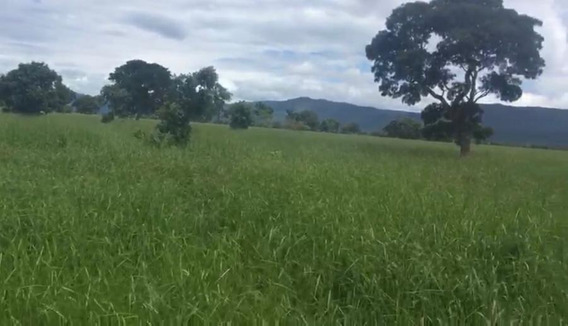 Fazenda Para Venda Em Nossa Senhora Do Livramento, Zona Rural - 802527