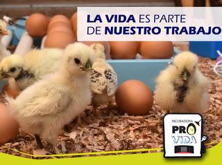 Incubadora 32 Huevos 100% Automatico Tecnicos Y Asesores