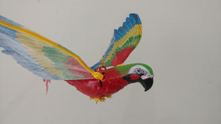 Chamas Arara Vermelha Gavião Águia Pássaro Falcão Gaivota