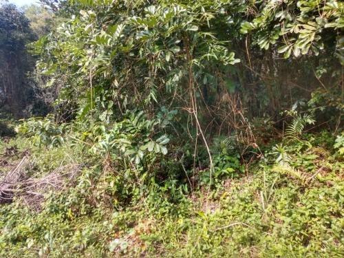 Terreno No Litoral Sul, Com 280 M²,em Itanhaém/sp 6023-pc