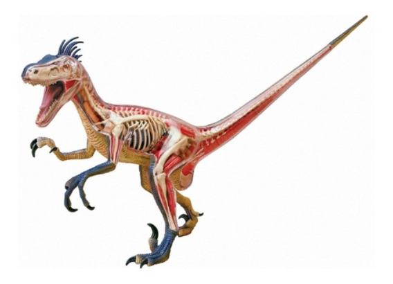 Anatomia Do Dinossauro Velociráptor - 4d Master