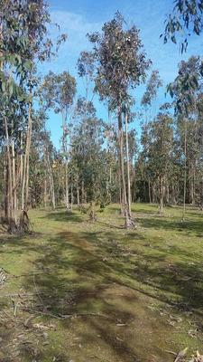 Terreno Algarrobo Norte