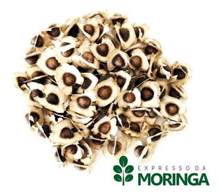 Moringa Oleifera Sementes Novas 1kg