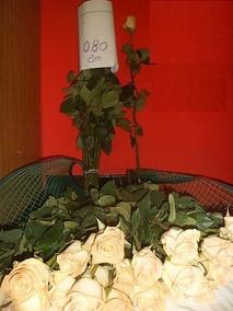 Flores De Venta Por Mayor Y Menor Distribuidor Nacional