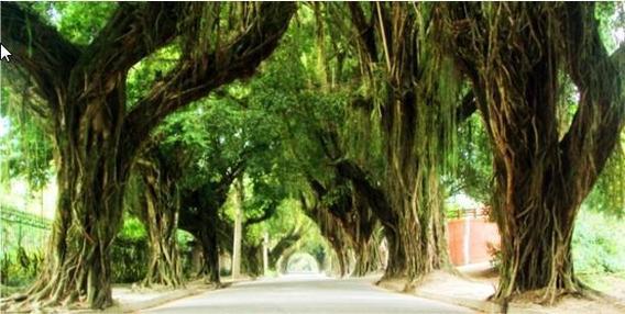 Terreno Residencial À Venda, Vila Progresso, Niterói. - Te0034