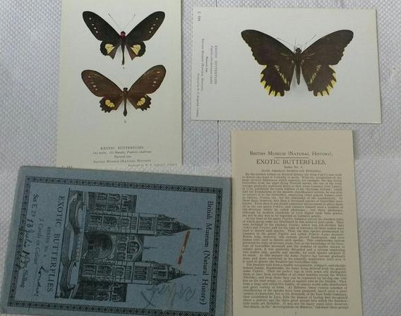 Colección Postales Museo Británico Mariposas 1925