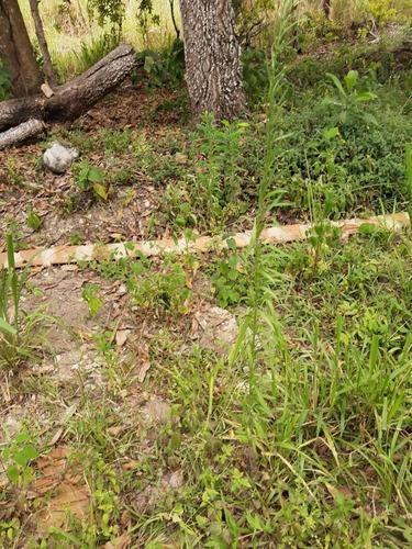 Fazenda Para Venda Em Flexeiras, Zona Rural - Fz - 065_1-1722206