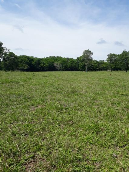 Fazenda A Venda Em Bonito - Ms (pecuária) - 1182