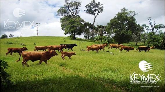 Campo Mixto - Agrícola - Ganadero - Forestación - Bernardo De Irigoyen - Misiones