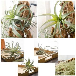 Nuevo Piña Artificial Hierba Aire Rata Plantas 6 Tipos