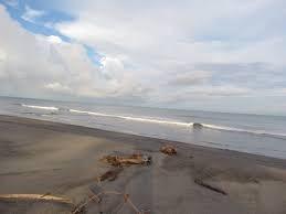 Se Vende Finca De 1,000 Hectáreas En Puerto Armuelles