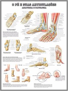Mapa Anatomia Do Pé 60x80cm Para Fazer Quadro - Fisioterapia