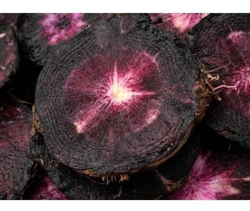 200 Semillas Zanahoria Negra Black Nebula Exotica Importadas Mercado Libre Pero quizá la idea más chocante acerca de las zanahorias es que su característico color naranja fue adoptado hace relativamente poco. 200 semillas zanahoria negra black nebula exotica importadas