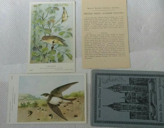 De Colección Postal Antigua1925 Inglaterra Pájaros