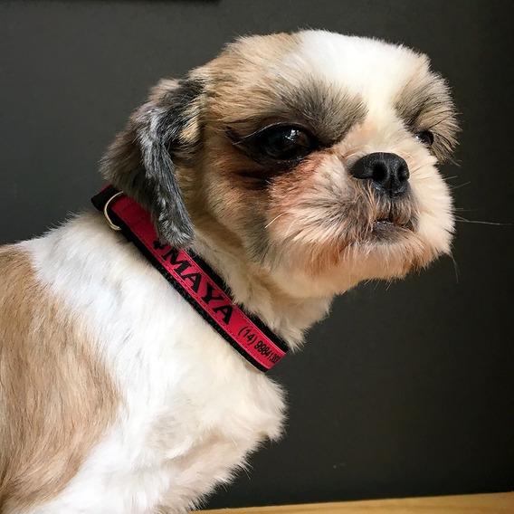 Coleira Personalizada Para Cães- Nome E Telefone - Tamanho P