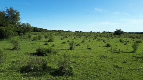 Campo En Tala, 36 Has, Aguadas, Montes, Luz, Dueño Vende.