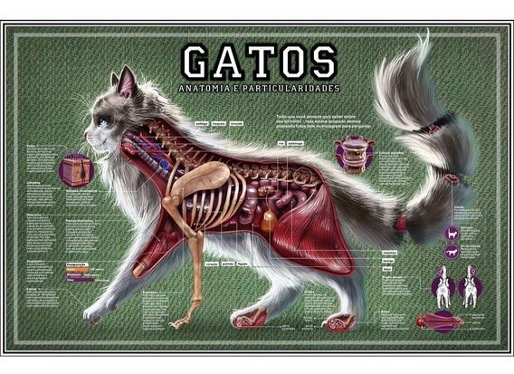 Poster Hd Anatomia Gato 65cmx100cm Clínica Pet Veterinária