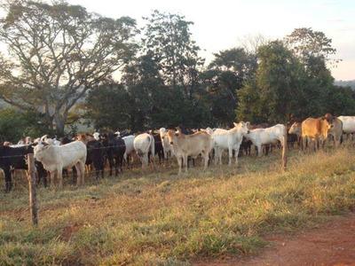 Fazenda Aptidão Mista - 518 Ha - Região São Roque De Minas (mg) - 628