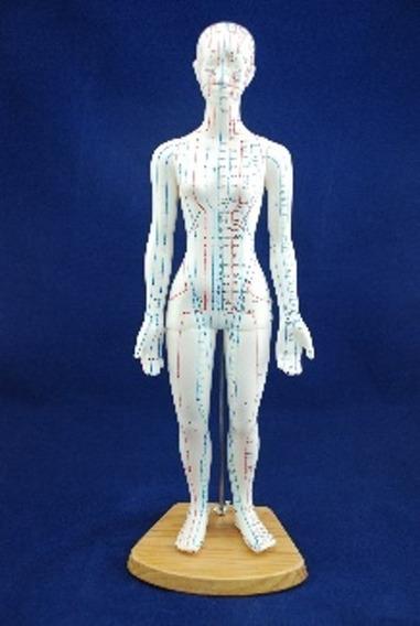 Modelo Anatomico Mujer 48 Cms