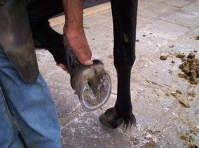 Casqueamento E Correção Dos Aprumos (cavalos Muares) 1 Dvd V