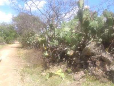 Rancho En Venta Localidad El Ruano, Nopala De Villagran, Hidalgo.