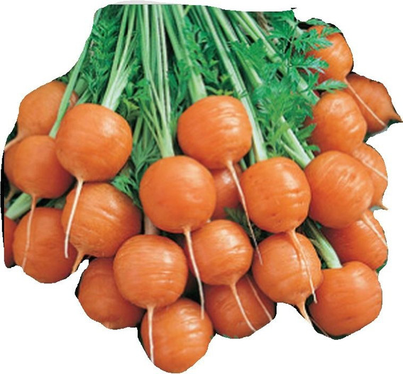 Zanahoria Paris Redonda 15 Semillas Hortaliza Sol Sdqro2