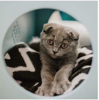 Catcube (cama) Juguete Lujoso Importado Para Gato