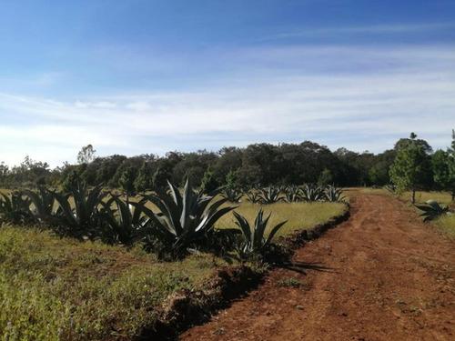 Imagen 1 de 12 de Terreno En Venta San Pablo Ojo De Agua