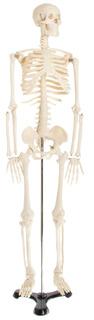 Modelo De Esqueleto Educativo American Educational, 1