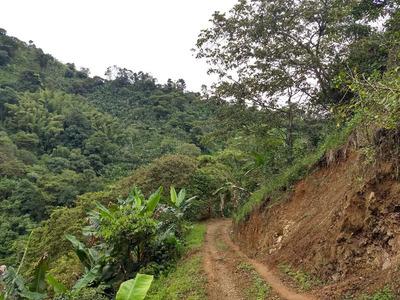 Finca En Venta En El Valle Para Aguacate